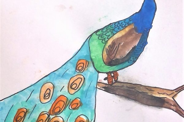 Year-1-Archie-Watercolour-Peacock