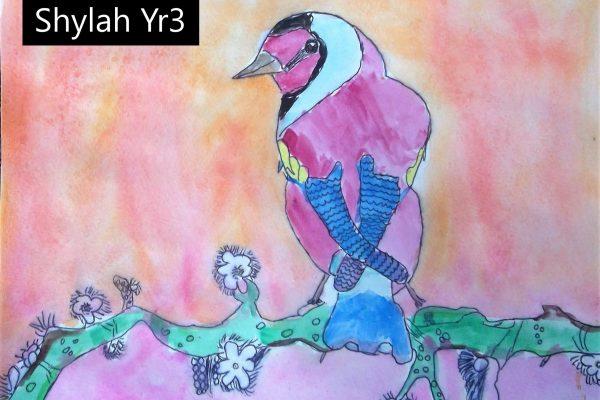 Year-3-Shylah-Watercolour-Bird